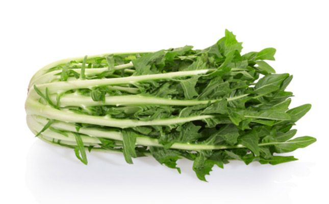 Chicoria